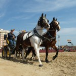 TARANTOS--FOTOS--(244)